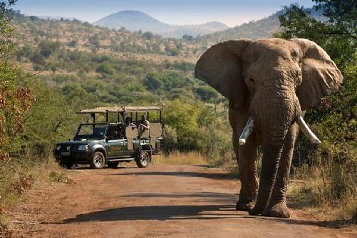 7 Days Zulu Coast to Kruger Safari