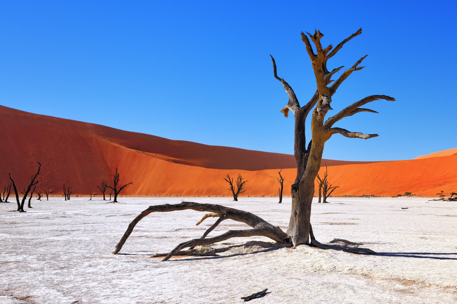 Big tour of Namibia